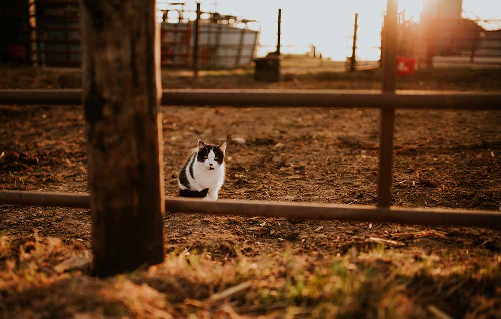 farm cat on farm land